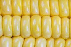 Noyaux de maïs Images stock