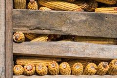 Noyaux de maïs dans la vieille grange Image stock
