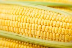 Noyaux de maïs macro Photos libres de droits