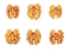 Noyaux de noix d'isolement sur le fond blanc photographie stock