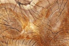 Noyaux sciés du tronc d'arbre trois Image libre de droits