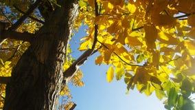 Noz de outubro fotos de stock