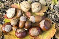 Nozes, bolotas, amêndoas, avelã e castanhas nas folhas de outono da cor Fotos de Stock Royalty Free