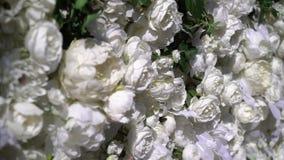 nozze Cerimonia di cerimonia nuziale arco Arco, decorato con i fiori bianchi che stanno nel legno, nell'area di cerimonia di nozz stock footage