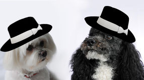 Nozze del cane Fotografia Stock