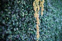 Nozze del contesto dell'erba Immagini Stock