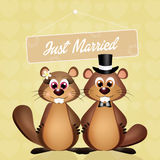 Nozze delle marmotte Immagine Stock