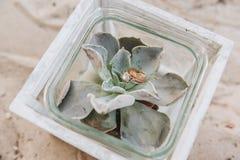 Nozze e anelli di fidanzamento su una pianta succulente immagini stock libere da diritti