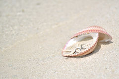 Nozze Ring Shell Beach Fotografia Stock