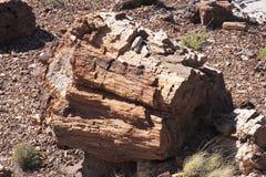 np被石化的森林 库存照片