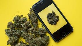 NPhone com uma fotografia da marijuana que encontra-se em um fundo amarelo Ações sociais para apoiar a marijuana legalizar foto de stock royalty free