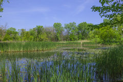 NPV自然中心沼泽和草 图库摄影