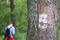 Nr. fünf auf dem Baum im Wald Stockbild