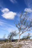 Nr Kendal, Cumbria de cicatrice de 6997 scouts Photo libre de droits