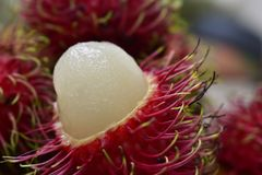 rambutan from the garden, sweet and delicious. royalty free stock images
