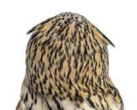 Närbild för bakre sikt av en Siberian Eagle Owl - Bubobubo Royaltyfria Bilder