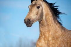 Närbildfoto av hästen utomhus Arkivbild