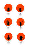 Ä°nsect icon set. Vector illustration of insect icon set vector illustration