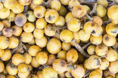 Níspero, nipero or mespel Japanese medlar fruit, taken in a market in Peru. Stock Images