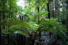 nsw горы Австралии голубое Стоковое фото RF