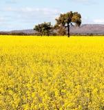 NSW-binnenland dichtbij Cowra royalty-vrije stock fotografie