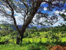 Farm land Australia nsw stock photo