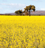 NSW outback near Cowra Royalty Free Stock Photo