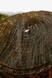 Nterior av en sågtandad trästam royaltyfria bilder