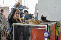 Nternational exhibition of cats Stock Photos