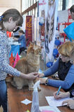 Nternational exhibition of cats Stock Images