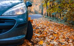 Tire in leaves Royalty Free Stock Photography