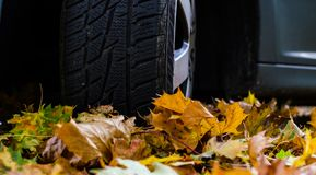 Tire in leaves Stock Photos