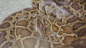Ntropical python στο ζωολογικό κήπο Επικίνδυνα ερπετά στο πλανήτη Γη στοκ φωτογραφίες με δικαίωμα ελεύθερης χρήσης
