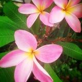 Nätt blommor Royaltyfri Bild