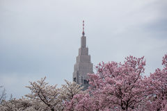 NTT Docomo Yoyogi Building,a skyscraper in Shibuya,Tokyo,Japan.With Cherry trees in Shinjuku Gyoen in the foreground. Cherry blossom is the flower of any of Royalty Free Stock Photos