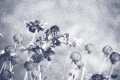 Nätta blommor med fjärilen i svartvit borstekonstform Fotografering för Bildbyråer