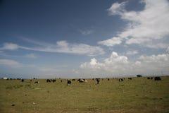 Nuage au-dessus de prairie   Photographie stock libre de droits