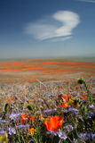 Nuage blanc au-dessus des fleurs de source Photo libre de droits