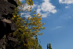 Nuage de ciel bleu de nature de fleur Photos stock