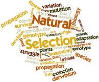 Nuage de mot pour la sélection naturelle Images libres de droits