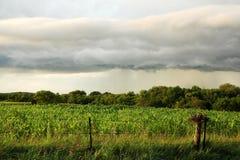 Nuage de tempête d'étagère d'Arcus au-dessus de champ de maïs américain de Midwest Images libres de droits