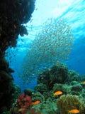 Nuage des poissons en verre Image stock