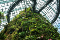 Nuage Forest Dome Photographie stock