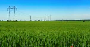 Nuages au-dessus de champ vert de jeune blé banque de vidéos