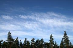 Nuages au-dessus de forêt Image stock