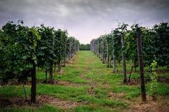Nuages au-dessus des vignobles Photographie stock libre de droits