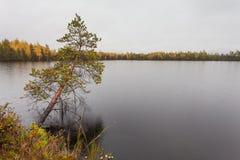 Nuages avec la pluie au-dessus du lac et solitaire foncés au-dessus du pin de l'eau dans la chute Photographie stock