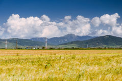Nuages blancs au-dessus d'un champ jaune de culture Photo stock