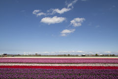 Nuages blancs doux au-dessus des fleurs Image libre de droits