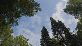 Nuages blancs entourés par les arbres luxuriants contre un beau ciel clair Arbres verts dans la vue de ciel de fond de Photo stock